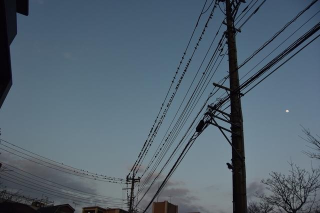DSC_2044_R.jpg
