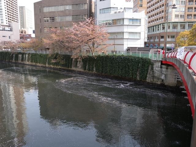 目黒川 桜 16日3.JPG