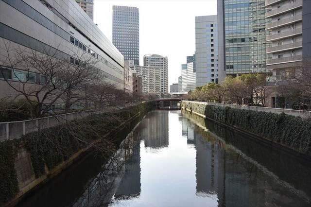 目黒川さくら9.JPG